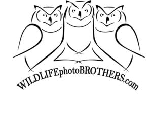 logosovafinalcierne